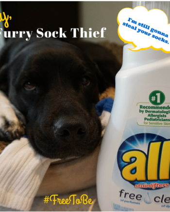 Our Furry Sock Thief VS. All Free Clear