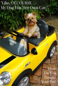 Of Course My Dog Has Her Own Car. LOL! IAMS Best Dog Food for pampered pets. Yorkie Love; I love my dog; MommyMafia.com