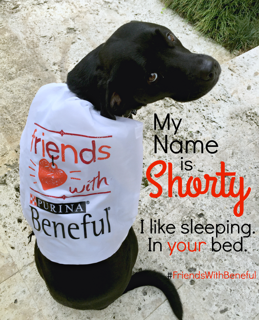 Shorty Friends with Beneful