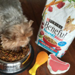 Helpful Tips For Switching Dog Food