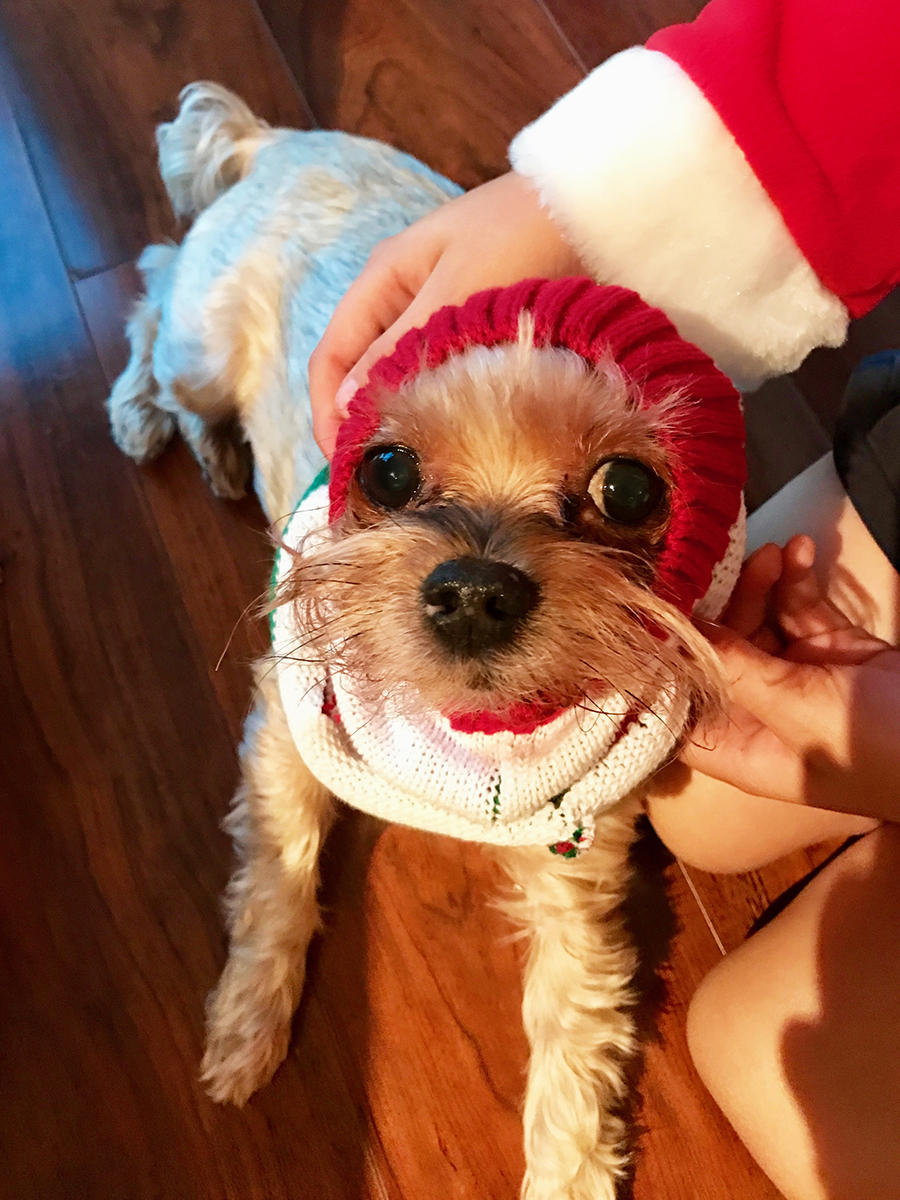 diy-ugly-christmas-sweater-for-dogs-2