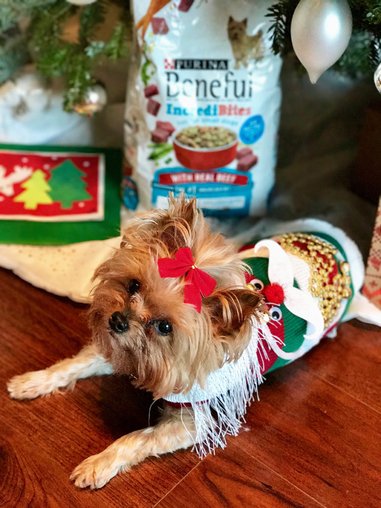 DIY Ugly Christmas Sweater For Dogs